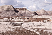 Best Sellers Prints - Petrified Forest National Park Print by Melany Sarafis