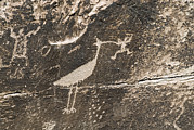 Zoomorphic Photos - Petroglyphs From The Puerco People by Rich Reid