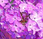 Phlox Digital Art Framed Prints - Phlox Fantasy Framed Print by David Lane
