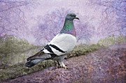 Green And White And Purple Pigeon Posters - Pigeon in the Park Poster by Bonnie Barry