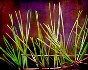 Pine Needles Photos - Pine Needles by Judi Bagwell