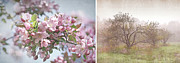 Apple Prints - Pink apple blossoms Print by Sandra Cunningham