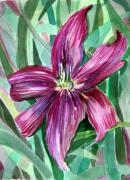 Botanical Drawings - Pink Day Lily by Mindy Newman