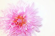 Pink Flower Prints Mixed Media Prints - Pink Print by Elaine Manley