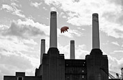 Pink Floyd Posters - Pink Floyd Pig at Battersea Poster by Dawn OConnor