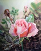 Printmaking Painting Posters - Pink Rose with Dew Drops Poster by Irina Sztukowski