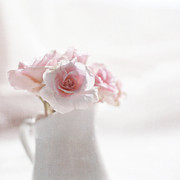 Softness Photos - Pink Roses by Jill Ferry