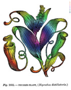Surrealistic Mixed Media Prints - Pitcher Plant Print by Eric Edelman