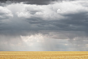 Yellow Prairie Photos - Plains of Gold by Andrea Hazel Ihlefeld