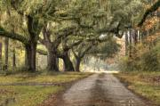 Southern Digital Art Prints - Plantation Drive Live Oaks  Print by Dustin K Ryan