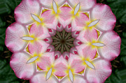 Kaleidoscope Photos - Plumeria 2 by Mark Gilman