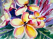 Caribbean Flower Framed Prints - Plumeria Framed Print by Barbara Richert