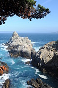 Point Park Originals - Point Lobos Number Four by Catherine Lau