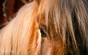 Equine Art Artwork Prints - Pony Print by Rachele Morlan