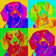 Doxies Digital Art - Pop Art Dachshund by Renae Frankz