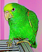 Green Parrot Prints - Pop Art Parrot Print by L S Keely