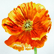 Watercolor By Irina Framed Prints - Poppy Framed Print by Irina Sztukowski
