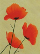 Red Poppies Drawings - Poppy Trio by John Lasco