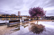 Oregon Scenery - Portland Oregon Waterfront Tree Reflection by Dustin K Ryan