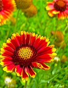Zinnias Photos - Power of the Flower by Randy Rosenberger