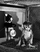 Surrogate Prints - Primate Fear Testing Print by Science Source
