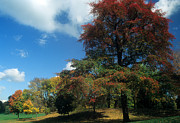Fall Foliage Photos - Prospect Park by Mark Gilman