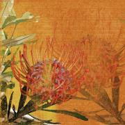 Leafy Mixed Media - Protea 1 by Kaypee Soh - Printscapes