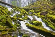 Cascade Mountains Prints - Proxy Falls In Willamette National Print by Craig Tuttle