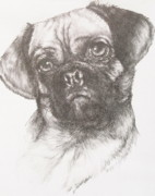 Designer Dogs - Puggle by Barbara Keith