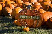 Thanksgiving Art Photos - Pumpkin Patch by Ricky Barnard
