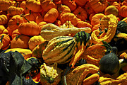 Pumpkins Posters - Pumpkins and gourds Poster by Elena Elisseeva