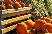 Rustic Metal Prints - Pumpkins Metal Print by Elena Elisseeva