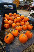 Rusty Pickup Truck Photos - Pumpkins In The Back by Mike Horvath