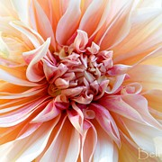 Flower Gardens Photos - Pure by Christine Belt