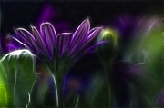 Purple Daisy Print by Stylianos Kleanthous