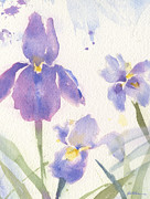 Sheila Golden - Purple Iris