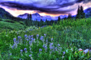 Juans Photos - Purple Skies and Wildflowers by Scott Mahon
