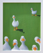 Ducks Paintings - Quackers by Sheryl  Sutherland
