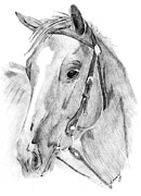 Quarter Horse Drawings Framed Prints - Quarter Horse Framed Print by Kasey Smith