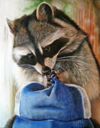 Raccoon Painting Posters - Raccoon Cap Poster by Cara Bevan