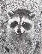 Raccoon Drawings - Raccoon Kit by Marlene Piccolin