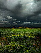 Lose Metal Prints - Rain Metal Print by Phil Koch