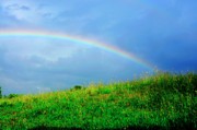 Rainbow Prints - Rainbow over Pasture Field Print by Thomas R Fletcher