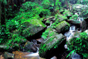 Puerto Rico Photo Prints - Rainforest Waterfall Print by Thomas R Fletcher
