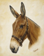 Equine Paintings - Ready Mule by Cathy Cleveland