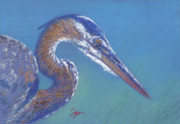 Heron Pastels - Ready to Strike by Suzie Majikol-Maier