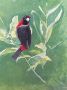 Rainforest Paintings - Red and Black Bird by William Patterson