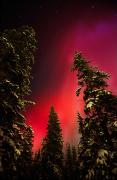 Mysteries Posters - Red Aurora Borealis, Pelly Crossing Poster by Robert Postma