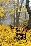 Golden Brown Framed Prints - Red benches in the park Framed Print by Jaroslaw Grudzinski