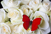 Aesthetic Posters - Red butterfly on white roses Poster by Garry Gay